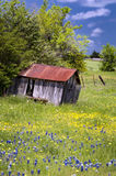 Abandoned Shed in Bluebonnet Field Stock Images