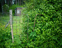 Abandoned shed with garden and overgrown fence. Gren overgrown fence with abandoned garden Royalty Free Stock Images