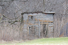 Abandoned Shed in the Woods Stock Photos