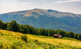 Abandoned sheep herd shed on hillside. Forest behind the grassy meadow. lovely countryside landscape in mountains Stock Images
