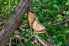 Abandoned shoe thrown to the tree stock photography