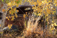 Abandoned shot up car sitting in weeds and yellow Aspen trees Royalty Free Stock Photography