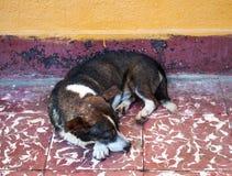 Abandoned Sleeping Dog Royalty Free Stock Images