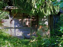 Abandoned small old wooden hut in the forest Royalty Free Stock Images