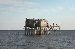 Abandoned stilt house in Cedar Key, Florida Royalty Free Stock Photo