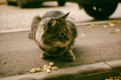 Abandoned street cat and food (Adobe RGB) Stock Photography