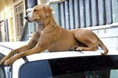 Abandoned street dog stock image