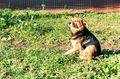 Abandoned street dog scratching on the grass and sunlight. Stock Photo