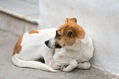 Abandoned street dog Stock Images
