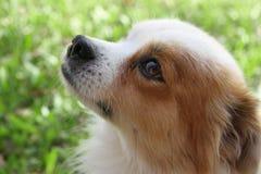 Abandoned street dog. Street dog abandoned victim of animal abuse Stock Photo