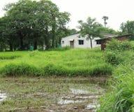 Abandoned swamp land house Stock Photo