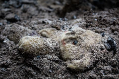 Abandoned teddy bear toy in the dirt. Abandoned and sad teddy bear toy in the dirt Royalty Free Stock Photo