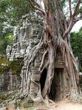 Abandoned temple, Angkor Wat, Cambodia Royalty Free Stock Photo