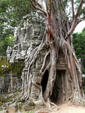 Abandoned temple in Angkor Wat, Cambodia Royalty Free Stock Images