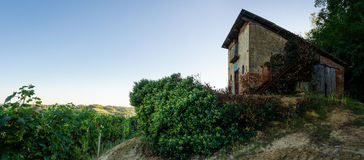 Abandoned toolshed i vingårdarna Royaltyfri Foto