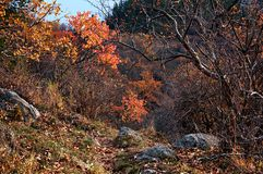 Abandoned trail in autumn mountains Stock Photo