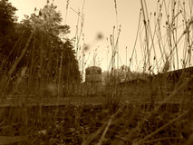 Abandoned Train through the weeds vintage. Sepia version of abandoned train through the weeds royalty free stock images