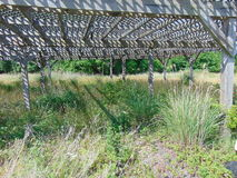 Abandoned. Trellis structure overgrown with plants stock images