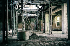 Abandoned warehouse. With a tree fallen through the roof royalty free stock photo