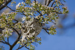 Abandoned Wasp Nest in Spring Stock Photography