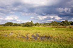 Abandoned wet natural meadow. Partly abandoned wet natural meadows under summertime cloudy sky Stock Photos