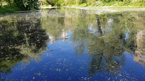 City pond with duckweed. Abandoned wild pond with mud in the middle of the city park stock video footage
