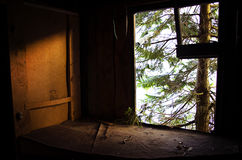 Abandoned window. And tree in Sweden Stock Images