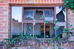 Abandoned windows. Overgrown Windows of the abandoned stock photography