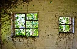 Abandoned windows. Overgrown Windows of the abandoned royalty free stock image