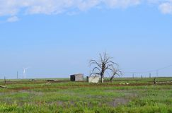 Abandoned wood shack and storm cellar in rural Texas Panhandle. With dead trees royalty free stock photo