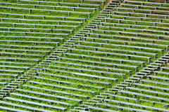 Abandoned wooden benches and bleachers in grass at old stadium Royalty Free Stock Image