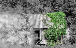 Abandoned Wooden Cabin Disintegrating. Partial black and white image of an abandoned wooden house in the forest half covered in green ivy vines desintegrating in Stock Images