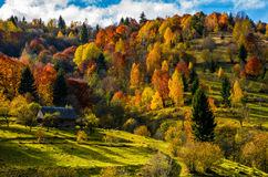 Abandoned wooden house in autumn on hillside. Abandoned wooden house in autumn forest. beautiful rural scenery on sunny sunset Royalty Free Stock Photo