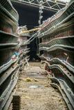 Abandonné chaîne de production endommagée et arrêtée des oeufs de poulet d'une ferme avicole Images libres de droits