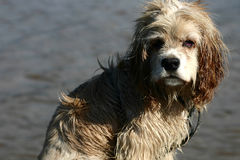 Abandonned dog Royalty Free Stock Photography