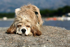 Abandonned dog. Abandoned dog on a beach stock photo