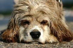 Abandonned dog Stock Photography