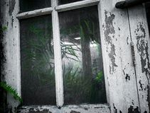 Look deeper to an abandonned factory. Abandonned factory old oldest haunted windows plant plants mobileshot phonephotography  phonegraphy royalty free stock photo