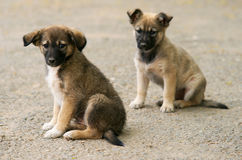 Abandonned puppies. Two abandonned pupies waiting for adoption royalty free stock images