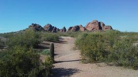 Abandonnez avec les roches rouges et les usines de floraison de Tridentata de Larrea à Phoenix, Arizona au printemps Photos libres de droits