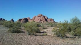 Abandonnez avec les roches rouges et les usines de floraison de Tridentata de Larrea à Phoenix, Arizona au printemps Photo libre de droits