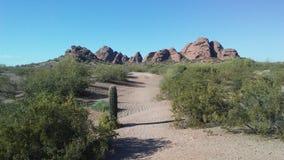 Abandonnez avec les roches rouges et les usines de floraison de Tridentata de Larrea à Phoenix, Arizona au printemps Photographie stock