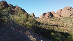 Abandonnez avec les roches rouges et les usines de floraison de Tridentata de Larrea à Phoenix, Arizona au printemps Photo stock