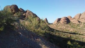 Abandonnez avec les roches rouges et les usines de floraison de Tridentata de Larrea à Phoenix, Arizona au printemps Photographie stock libre de droits