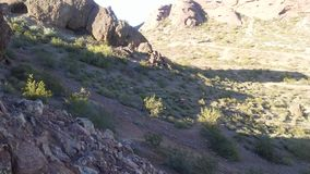 Abandonnez avec les roches rouges et les usines de floraison de Tridentata de Larrea à Phoenix, Arizona au printemps Images libres de droits