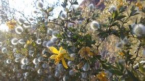Abandonnez avec les roches rouges et les usines de floraison de Tridentata de Larrea à Phoenix, Arizona au printemps Images stock