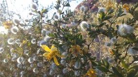 Abandonnez avec les roches rouges et les usines de floraison de Tridentata de Larrea à Phoenix, Arizona au printemps Photos stock