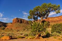 Abandonnez l'arbre avec le grand MESA à l'arrière-plan Photo stock