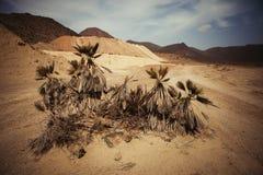 Abandonnez l'endroit avec des palmiers situés dans l'Espagne du sud-est Image libre de droits