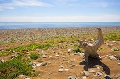 Abandonnez la côte sauvage de la mer du Japon Photographie stock libre de droits